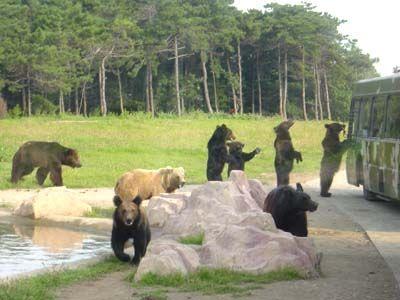 沈阳森林野生动物园在哪