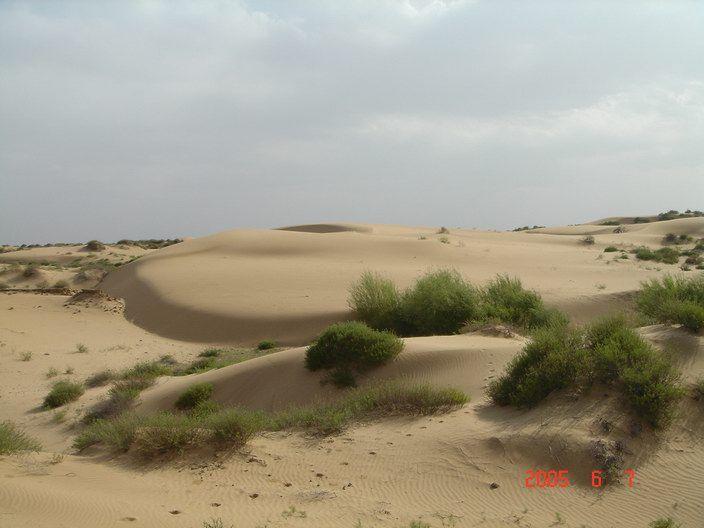毛乌素沙漠旅游-毛乌素沙漠旅游景点-毛乌素沙漠图片